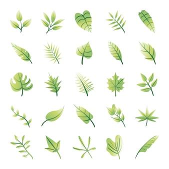 Pakiet liści roślin ustawić ikony