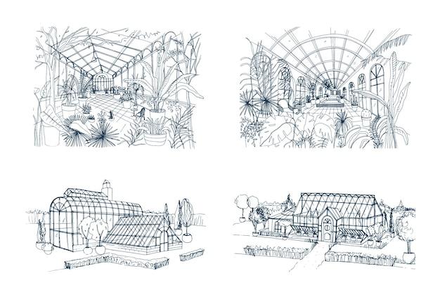 Pakiet odręcznych rysunków szklarni pełnych roślin z dżungli. zestaw szkiców szklarni z egzotycznymi palmami rosnącymi w doniczkach. widoki wewnętrzne i zewnętrzne. ilustracja wektorowa monochromatyczne.