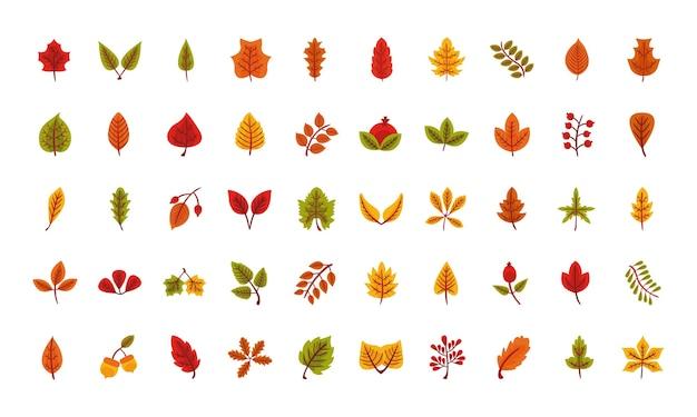 Pakiet pięćdziesiąt jesiennych liści płaski ikony wektor ilustracja projekt