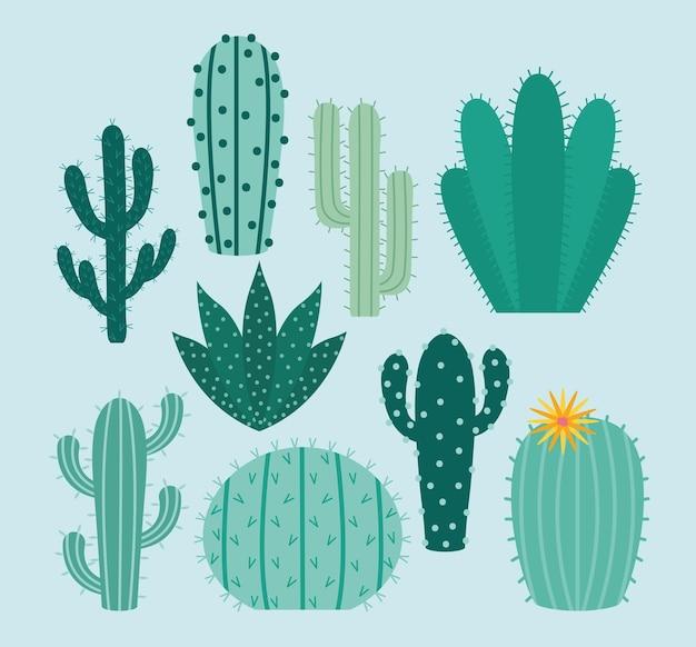 Pakiet przedmiotów z kaktusa