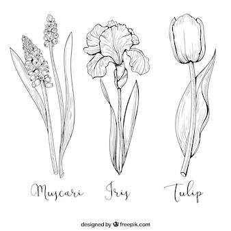 Pakiet trzech ręcznie rysowane kwiatów