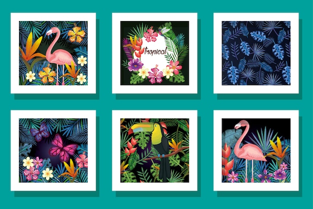 Pakiet zwierząt z kwiatami tropików