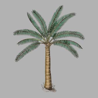Palma na białym tle
