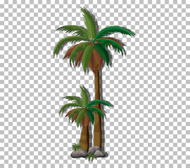 Palma na przezroczystym tle