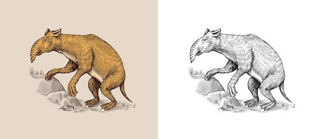 Palorchestes torbacze z rodziny palorchestidae vintage wymarłe zwierzę retro ssaki ręcznie rysowane