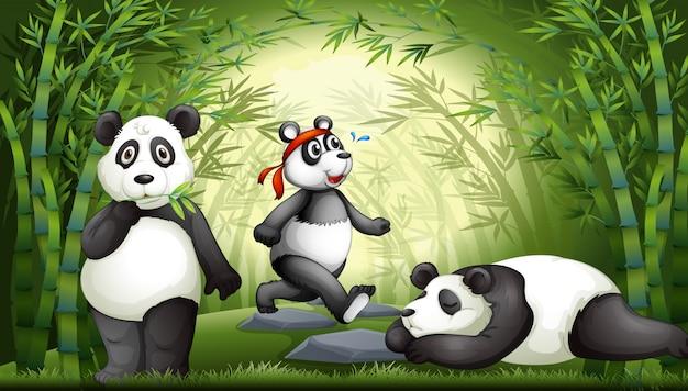 Panda w bambusowym lesie