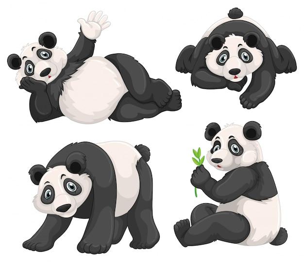 Panda w czterech różnych pozycjach