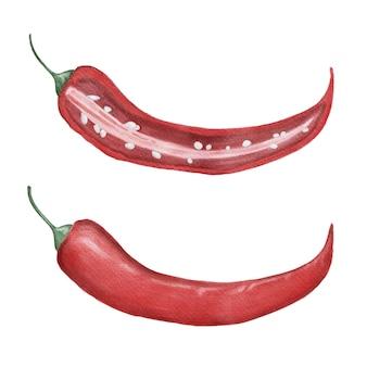 Papryczka chili pikantny zestaw akwarela na białym tle