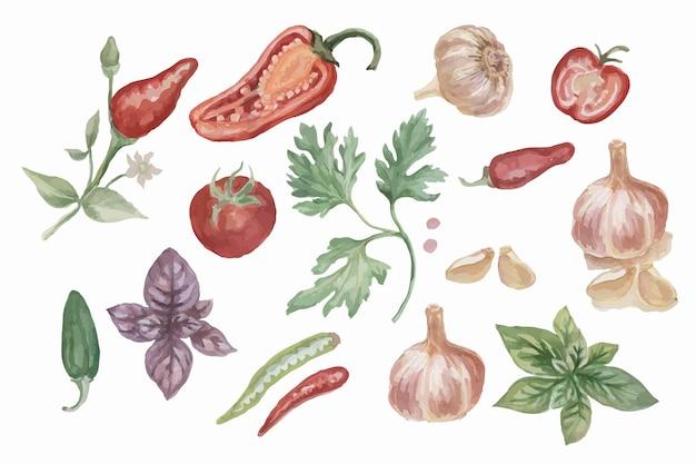 Papryka chili przyprawy akwarela ręcznie rysowane illustratio tło pikantne jedzenie