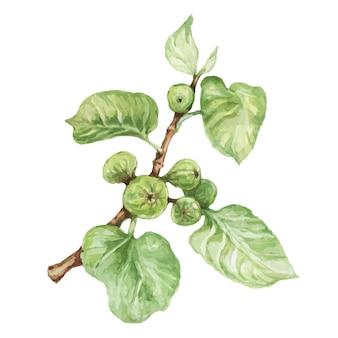 Papryka chili przyprawy akwarela ręcznie rysowane ilustracja ustawić tło pikantne jedzenie