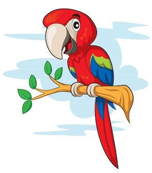 Papuga cartoon