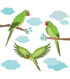 Papuga ilustracja