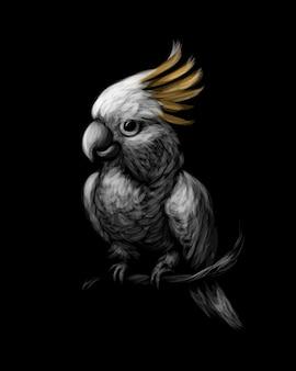Papuga kakadu czubata siarki, cacatua galerita, z grzebieniem z przodu na czarnym tle. ilustracja
