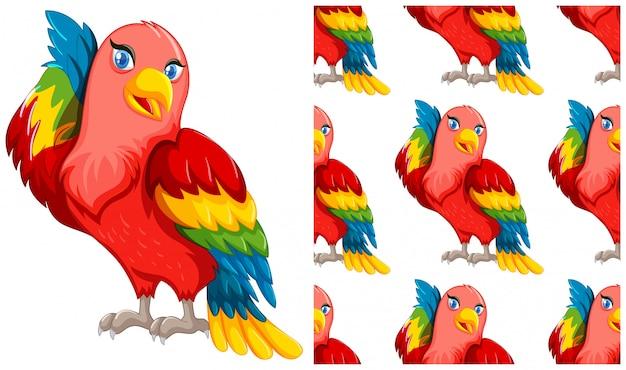 Papuga na białym tle