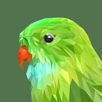 Papuga twarz z geometrią