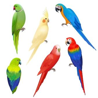 Papugi realistyczne. lot dzikiej przyrody egzotyczne kolorowe ptaki piękne amazonia tropikalne życie papugi ilustracje. ilustracja papuga ptak realistyczne, dzikie zwierzę tropikalne