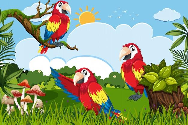 Papugi w dżungli