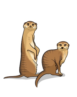 Para afrykańskich zwierząt sawanny suricates na białym tle w stylu cartoon. edukacyjna ilustracja zoologii, obraz do kolorowania.