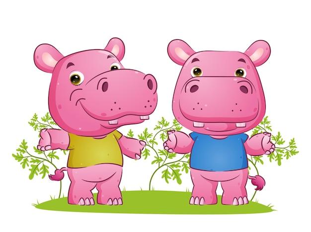 Para słodkich hipopotamów tańczy z różnymi pozowanymi ilustracjami