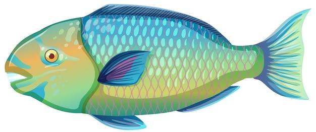 Parrotfish w stylu kreskówka na białym tle