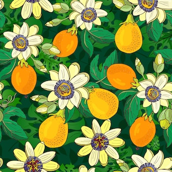 Passiflora (passiflora, marakuja) na ciemno