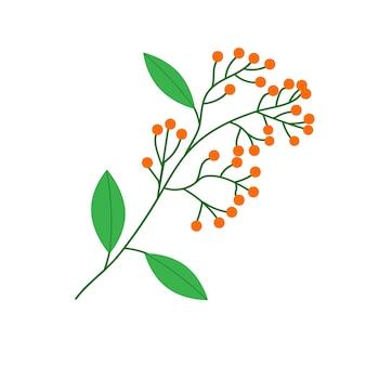 Pęczek jagód jarzębiny zwisający z gałęzi drzewa liściastego. ilustracja wektorowa na na białym tle.