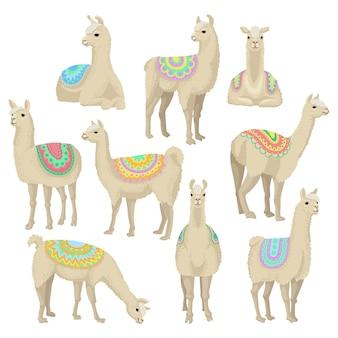 Pełen wdzięku zestaw lamy, zwierzę alpaki w ozdobnym ponczo stwarzające w różnych sytuacjach ilustracje na białym tle