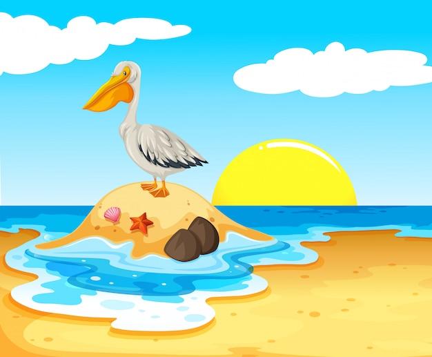 Pelikan ptak na plaży
