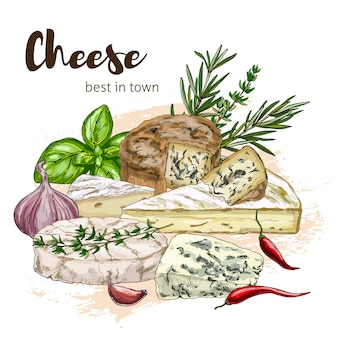Pełny kolor realistyczne szkic ilustracji mozzarelli