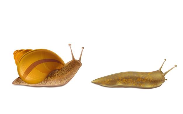 Pełzający ślimak burgundii lub rzymu i czerwony ślimak