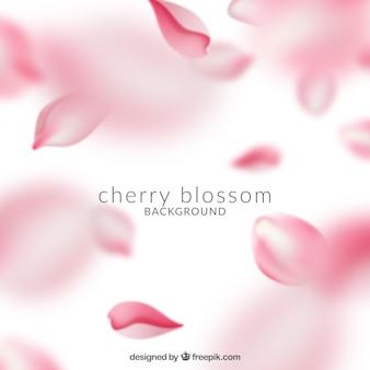 Piękny różowy kwiat wiśni tło