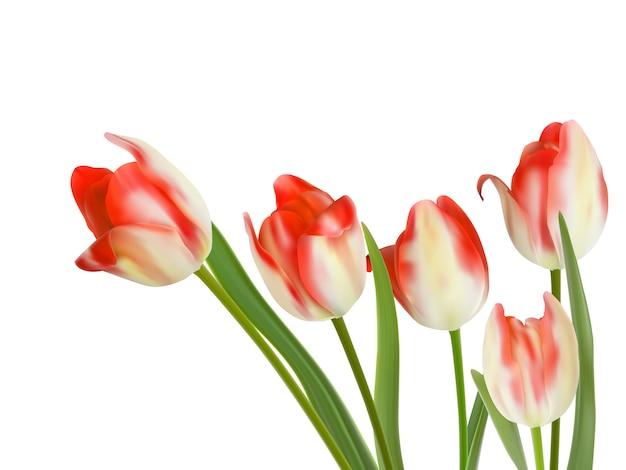 Pięć pięknych tulipanów na białym tle.
