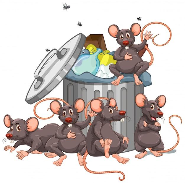 Pięć szczurów siedzących obok kosza na śmieci