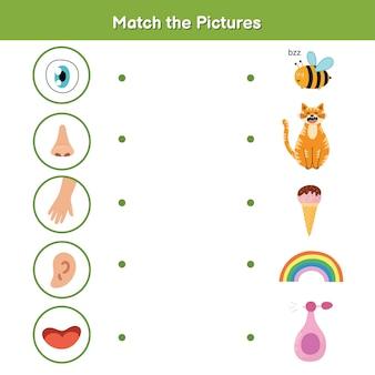 Pięć zmysłów gra dla dzieci. wzrok, dotyk, słuch, węch i smak. dopasuj stronę aktywności ze zdjęciami.
