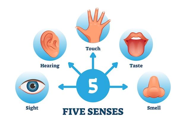 Pięć zmysłów oznaczonych schematem otrzymywania informacji sensorycznych. kolekcja edukacyjna obejmująca wzrok, słuch, dotyk, smak, zapach jako infografiki człowieka doświadczającego uczuć poznawczych.