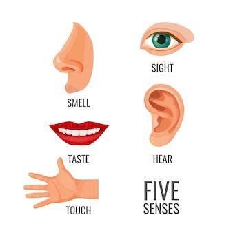Pięć zmysłów z tytułami na częściach ciała. węch, wzrok i dotyk, słuch i smak. metody percepcji i zmysłów, narządy pomagające czuć