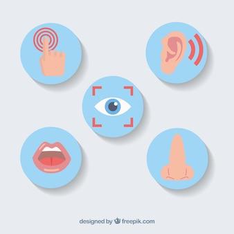 Pięć zmysłów zestaw ikon