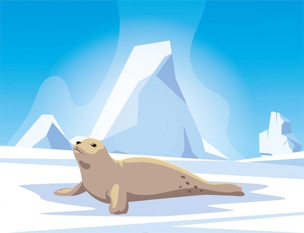 Pieczęć na biegunie północnym, arktyczny krajobraz