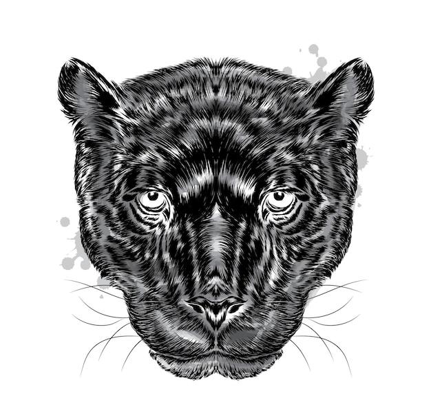 Piękna czarna pantera na białym tle
