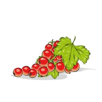 Piękna dojrzała porzeczka. jagody i owoce, lato.
