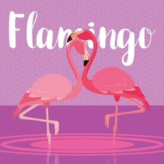 Piękna flaminga ptaków para w krajobrazie