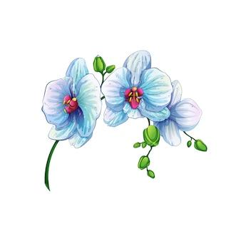 Piękna gałąź z storczykowymi kwiatami.