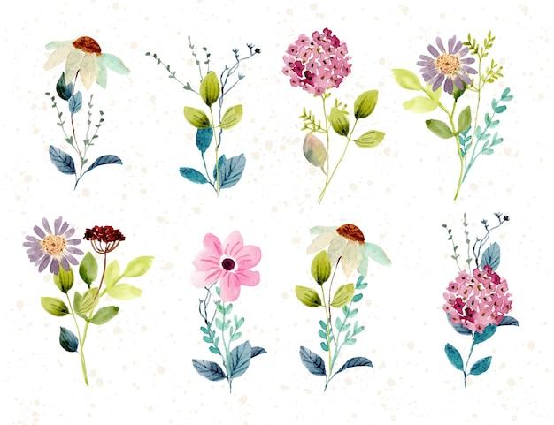 Piękna kolekcja kwiatów akwarela