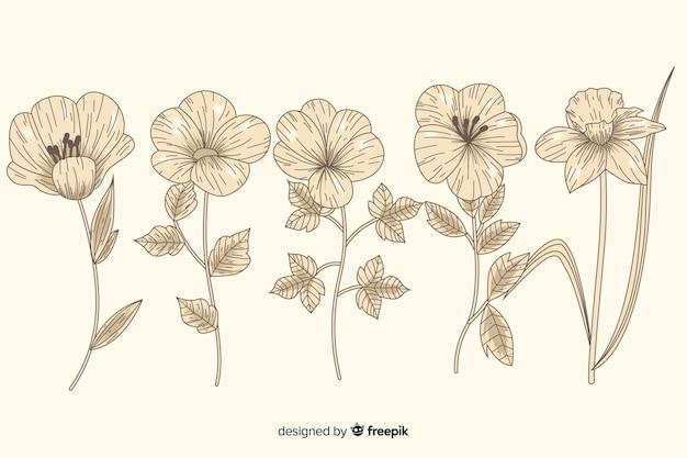 Piękna kolekcja kwiatów botaniki w stylu vintage
