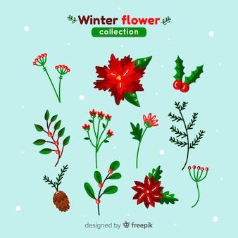 Piękna kolekcja kwiatów zimowych