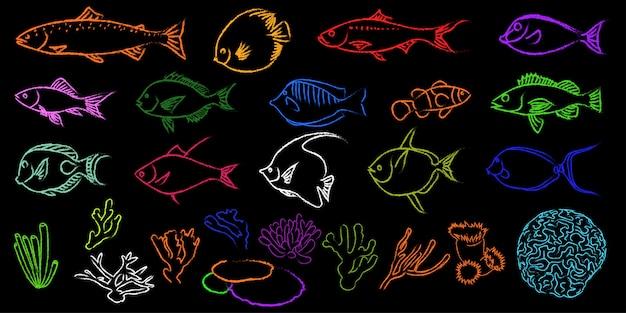 Piękna ryba z wolnej ręki i koral w ciemności