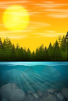 Piękna scena leśna woda