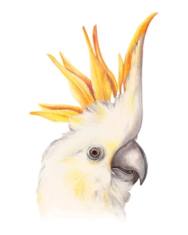 Piękna żółta kakadu papuga