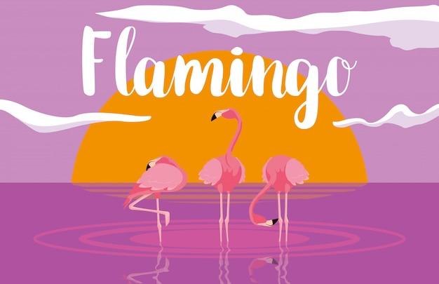 Piękne flamingi ptaki gromadzą się w krajobrazie