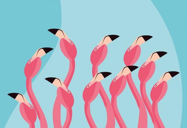 Piękne flamingi ptaki stada głowy